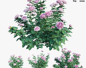 3D forest Queen of Sweden rose