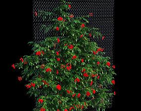 Rose plant set 33 3D
