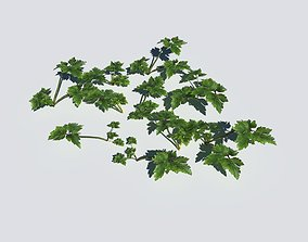 Creeping Buttercup Pack 3D