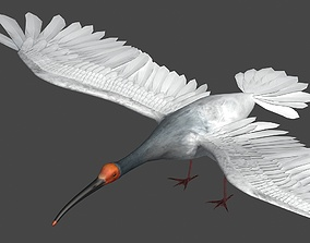 Crested Ibis 3D model
