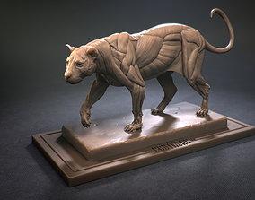 Leopard ecorche architecture 3D print model