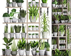 3D model Collection of plants in concrete pots 2