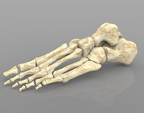 Foot Bone Female with Texture 3D