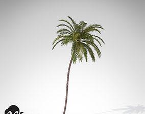 XfrogPlants Coconut palm 3D