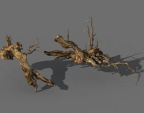 Populus euphratica-poplar-special tree 18 3D model