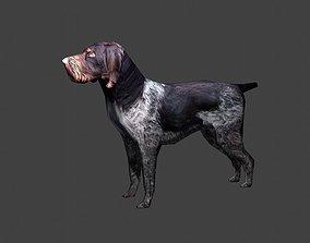 3D model Deutsch Drahthaar Hunting Dog