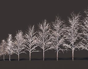 Winter birches with snow 3D model