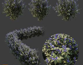 3D model Caryopteris