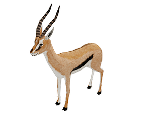 3D model animated Gazelle