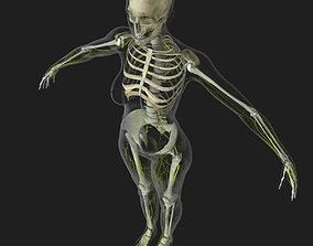 3D human Central Nervous System with Skeleton Female