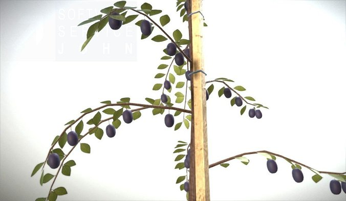 here-is-a-small-plum-tree-in-the-summer-