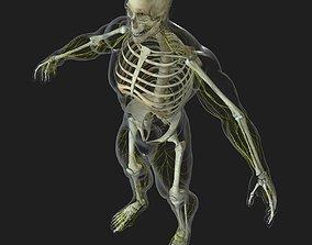 3D model Human Central Nervous System with Skeleton