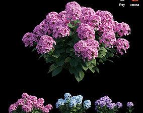Plants Hydrangea set 21 3D