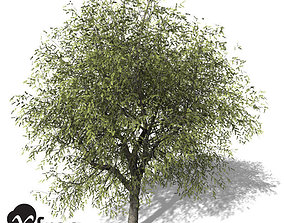 3D XfrogPlants White Willow