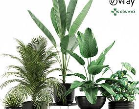 Plants collection 119 growfx 3D