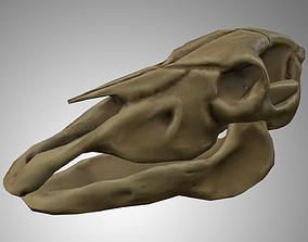 3D asset Horse Skull