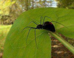 Spider Black Widow Free 3D asset