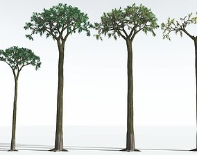 EVERYPlant Spiny Scale Tree EXT --24 Models-- 3D
