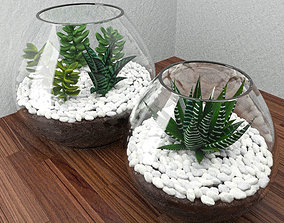 Succulents with stones in glass bowl 3D model