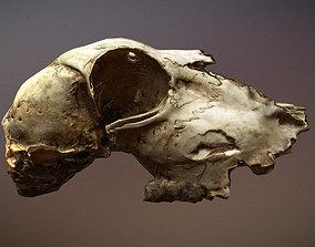 Scanned photorealistic old broken sheep skull 3D model