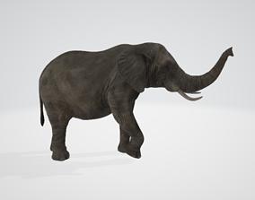 3D trunk Elephant