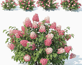 3D Hydrangea Paniculata Nr2 - Red Diamond- 4 Sizes