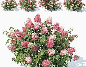 3D Hydrangea Paniculata Nr2 - Red Diamond- 4 Sizes