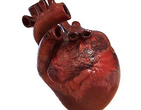 organ Human Heart 3D