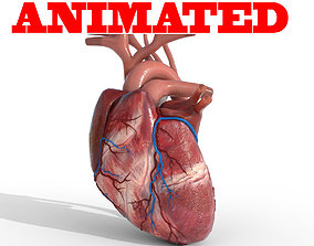 3D Human Heart animated