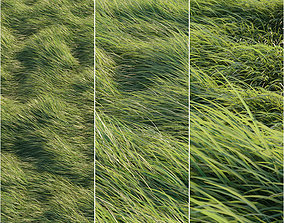 Long grass 3D