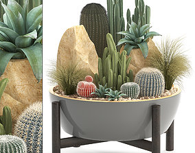 3D model Collection of Exotic Cactus Plants 7