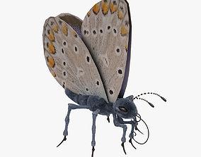 3D model Blue Butterfly Open 02