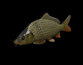 realistic 3D model Common carp fish