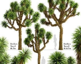 Set of Joshua or Yucca brevifolia Trees - 3 Trees 3D
