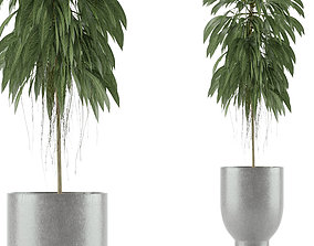 Single Plant 11 3D