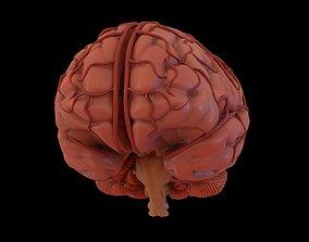 system Human Brain 3D model
