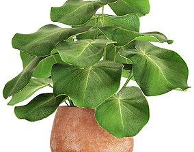 3D Tropical plant in pot