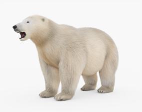 3D model Polar bear with Fur
