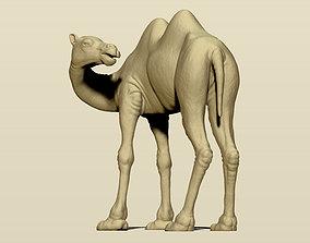 Camel Bactrian 3D printable model