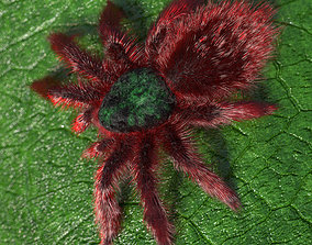 3D asset Tarantula Caribena Versicolor