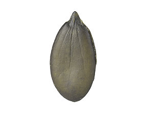 Photorealistic Pumpkin Seed 3D Scan
