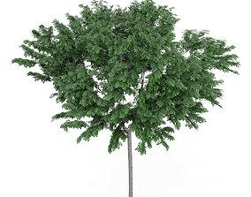 3D Common Ash Fraxinus excelsior 13m 2