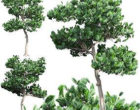 Pine 1 3D