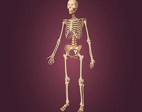 3D Human Skeleton