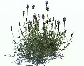 Flowering Long Stemmed Plant 3D model
