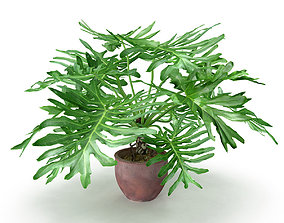 3D model pot-plant Philodendron Selluom