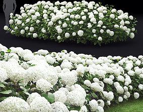 3D Hydrangea arborescens hedge 01