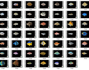 3D model Game Ready Pack 1 - Low poly Rif Fish Collection