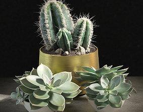 Set of plants 01 3D