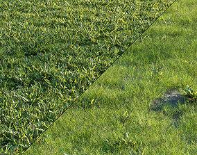 Grass Set 01 3D asset